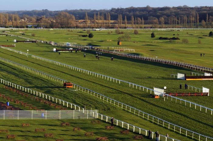 Minella Bobo is favoured in The Brown Chamberlin Trophy at Newbury on Friday