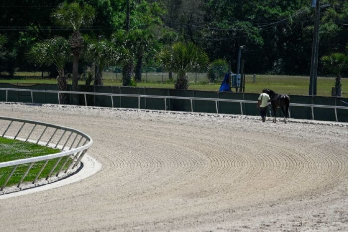 The Tampa Bay Derby will be run at Tampa Bay Downs on Saturday