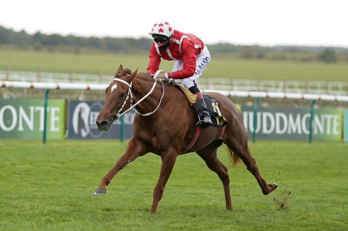 Saffron Beach will be heading to Newmarket on October 2