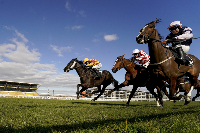 Horses in action at Newbury