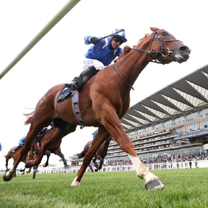Mohaafeth could return to York
